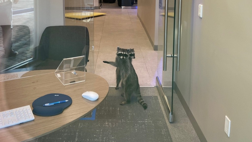 Raccoons inside a bank in Redwood City.