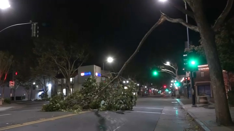 Photos: Gusty Winds Topple Trees, Wires Around the Bay Area