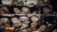 Discover the Hidden World of Abalone Farming