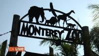 Ross Takes A Field Trip to the Monterey Zoo