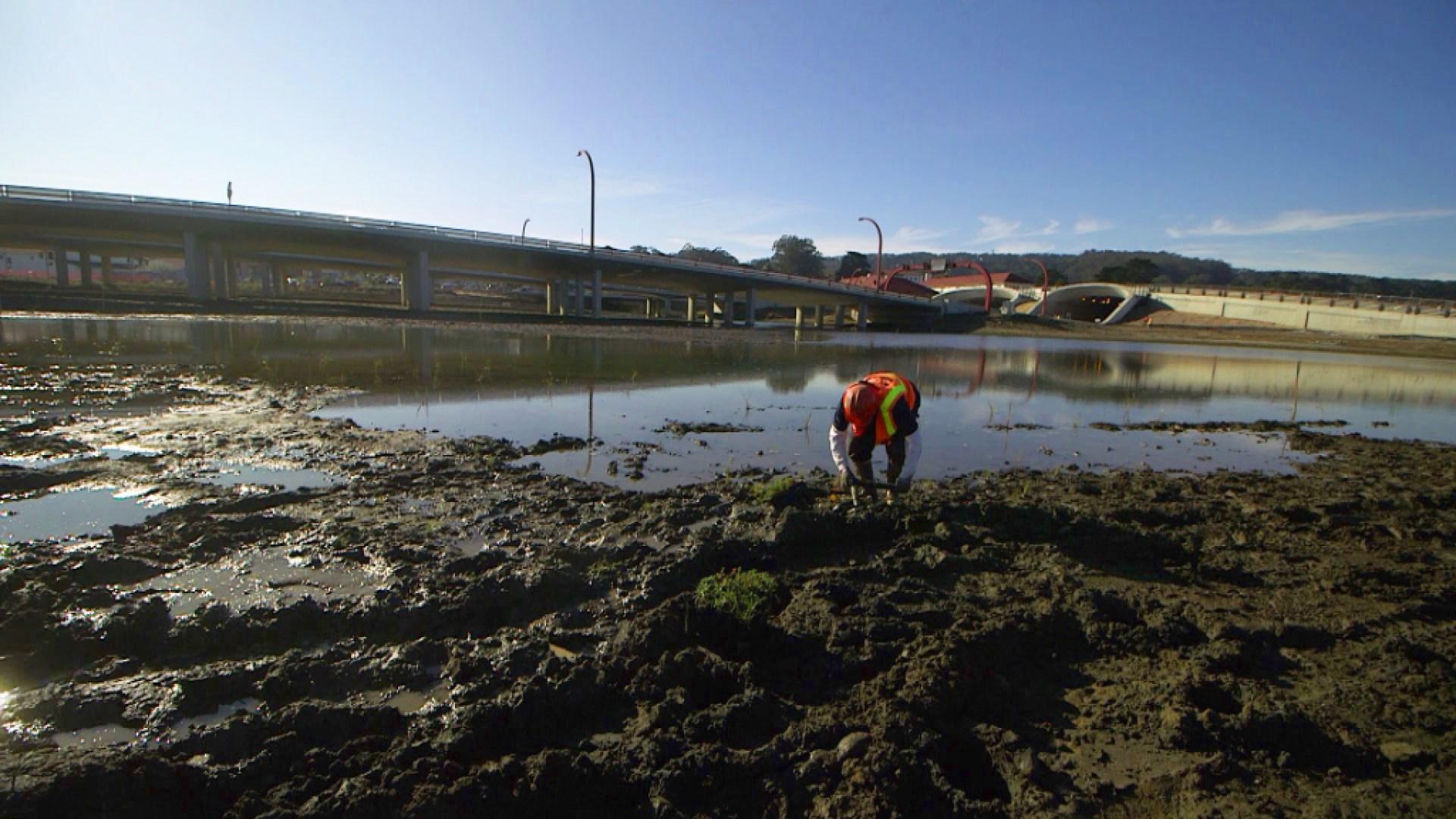 A Presidio crew plants native plants around the newly-restored salt water marsh.