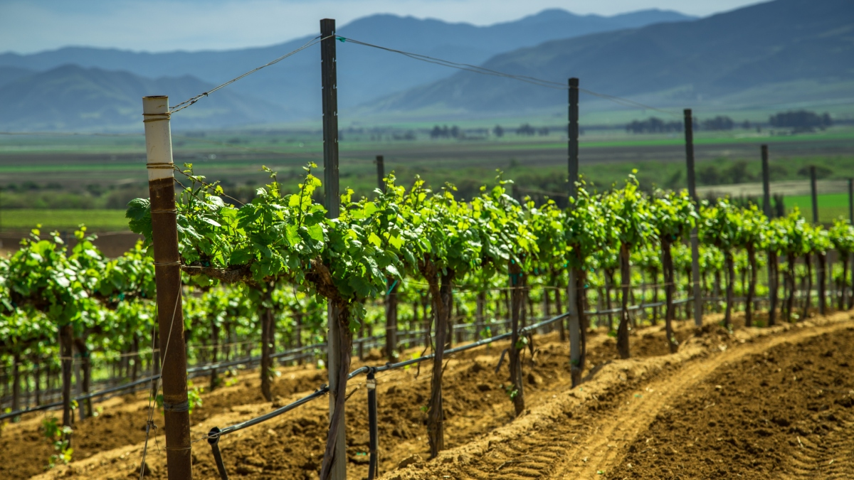 California to Impose Statewide Rules for Winery Wastewater