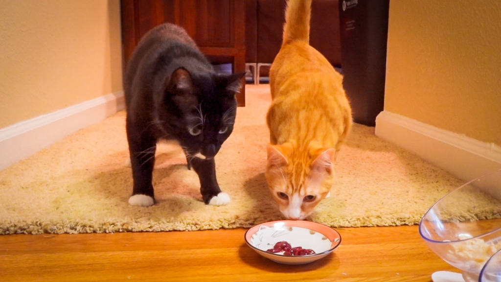 two cats examining a small dish of raw chicken liver