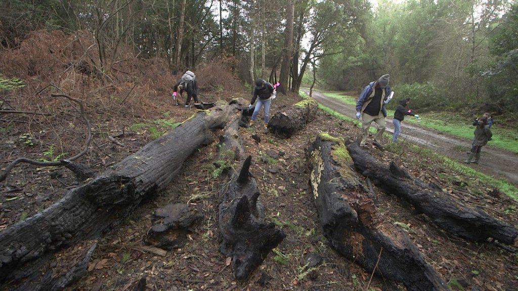 A research team from Dominican University scours recently burned land in Bear Valley in west Marin County for salamanders and newts as part of a study of the populations.