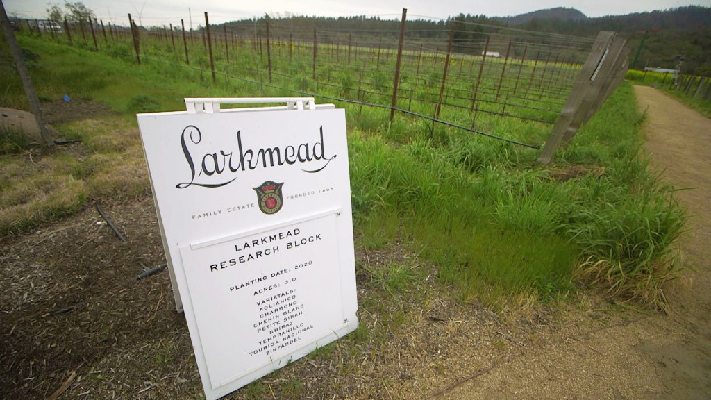A sign at 125-year old Larkmead Winery announces a research plot where grape varietals from dryer climates are being grown and tested.