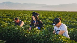 Jennifer Rocha has been working in the fields with her parents, Jose Juan and Angelica Maria, since she was in high school.