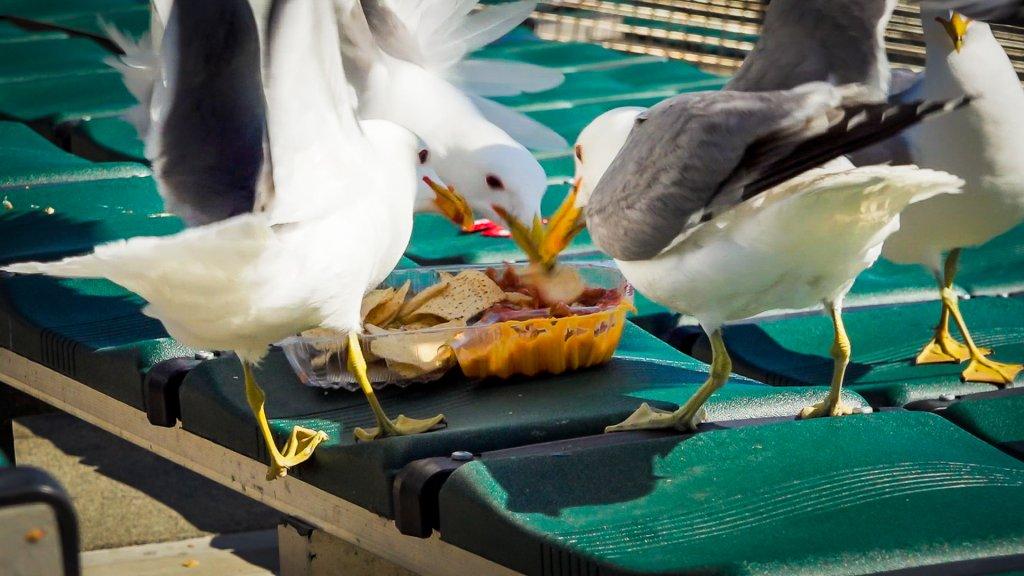 birds pecking at nachos