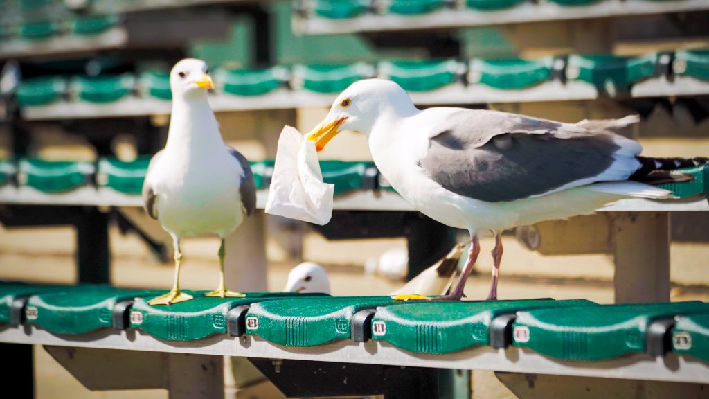 two gulls stand next to each other on a green stadium bench. one holds a paper bag in its beak.