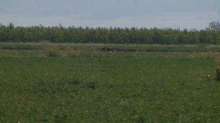 Colusa County helicopter crash