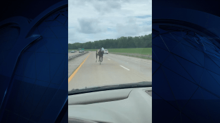 Bold and Bossy ran briefly onto Interstate 69