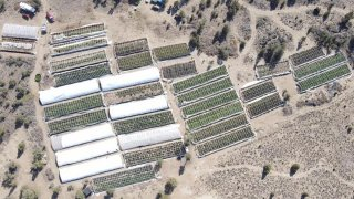 A marijuana grow is seen in an aerial photo taken by the Deschutes County Sheriff's Office the day officers raided the site in the community of Alfalfa, Ore.