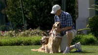 Man and His Dogs' 9-Year, 150,000-Mile Journey of Hope and Healing Comes to San Jose