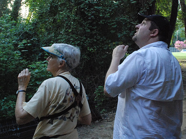 Thrower and Cook look and listen for a Red-shouldered Hawk outside Cook's apartment where he often hears them.