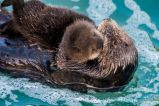 Brand-New Otter