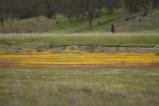 wildflowershorn