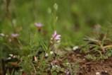wildflowershorn5