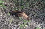 Sea Lion Found in Mountain View