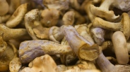 Mushroom Mardi Gras