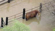 Efforts are underway to rescue horses trapped in San Jose floodwaters.