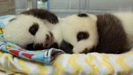 [ONE-TIME-USE] Atlanta Pandas