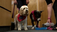 Therapy Dogs Serve as Victim Advocates