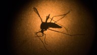 Yolo Co. Resident Tests Positive for Zika Virus: CDC