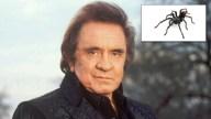 Tarantula, Native to Folsom Area, Named After Johnny Cash