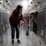 Humane Society International rescue of dogs from South Korean do