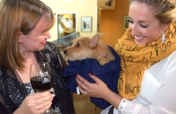 The 13th Annual Wine & Whiskers in Walnut Creek