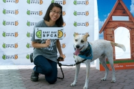 East Bay SPCA's Annual Adopt-a-thon at Jack London Square!