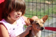Bark & Meow Around the Block + Clear the Shelters Street Fair and Adopt-a-Thon