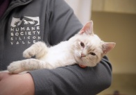 Humane Society Silicon Valley to Participate in Clear the Shelters 2016