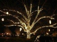 Sonoma Fairmont Tree Lighting