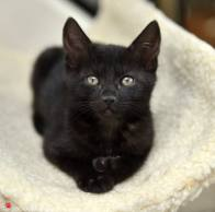 Bay Area Cats Available At Saving Grace Rescue