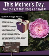 Adopt a Rose for Mother's Day