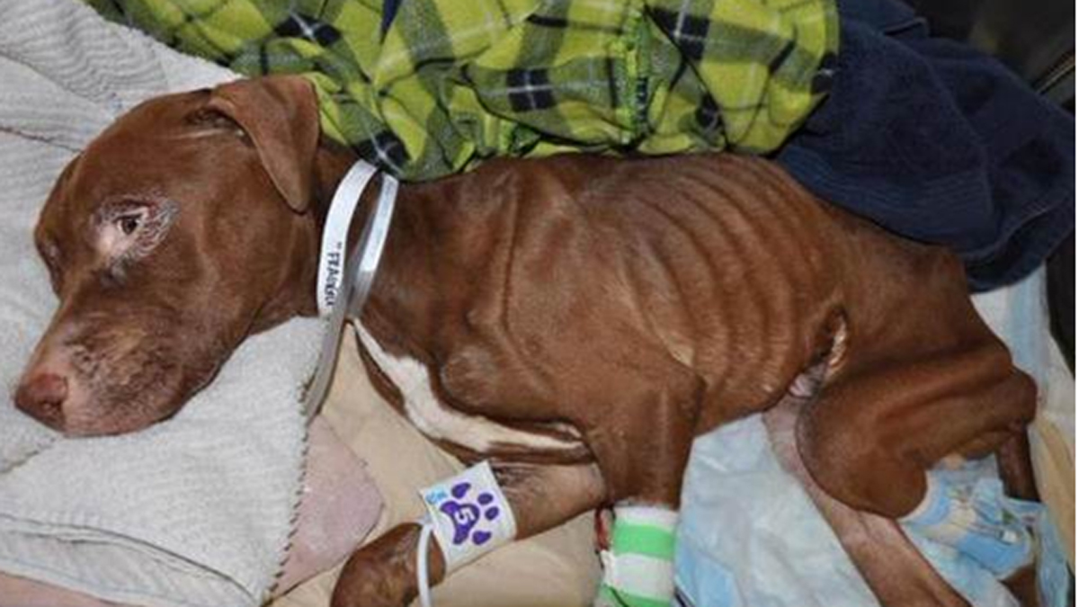 Pup Found Zipped Inside Suitcase Can Now Eat on Own, Walk