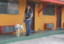 California Motels Turn Away Woman With Service Dog