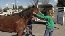 Horses Stranded in San Jose Floodwaters Reunited With Owners