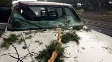 Crashing Tree Busts Woman's Windshield Along Highway 13