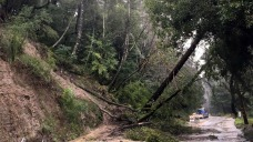 Toppled Trees, Swollen Rivers Across Saturated Bay Area