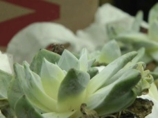 Officials Confiscate Succulents Meant to be Shipped Overseas