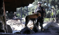 Search Dogs, Handlers Look for Signs of Hope in Montecito