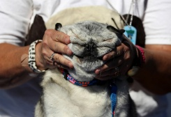 Canines Compete in World's Ugliest Dog Contest