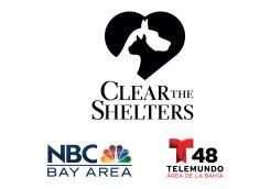 NBC Bay Area Talent Pets