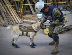Mexican Navy Honors Frida the Rescue Dog With Retirement Ceremony