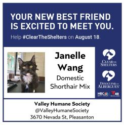Clear the Shelters: Adoptable Pets Named After Our News Team