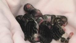 140 Animals Need to Be Adopted at Peninsula Shelter