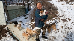 Korean Woman Saves Dogs From Becoming Dinner