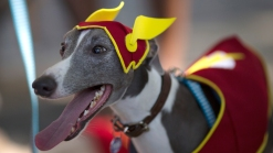 Brazil's Carnival Parade Is For the Dogs