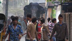 Elephant Rampages in India Town, Smashing Homes